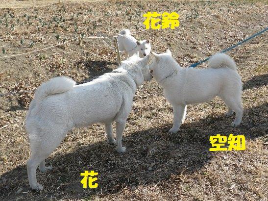 2013.3.3 番外編4・花&空知