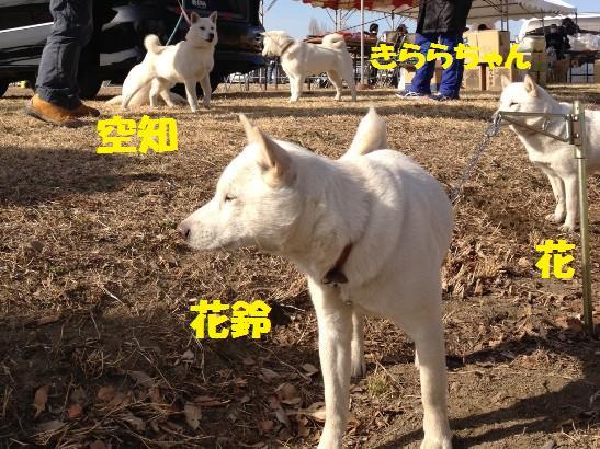 2013.3.3 番外編10・きららちゃん