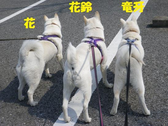 2013.3.10 後ろ姿だけど勢ぞろい