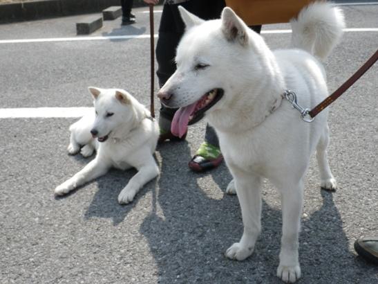 2013.3.10 きららちゃん(左)&リュート君
