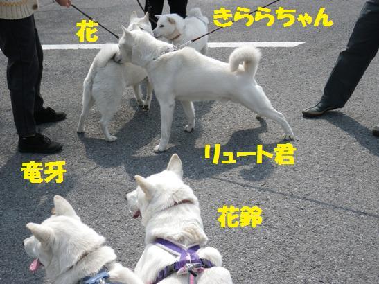 2013.3.10 リュート君&きららちゃん