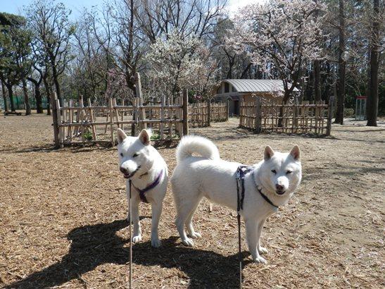 2013.3.11 いつもの公園で~花&花鈴