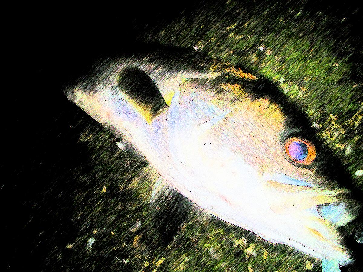 シーバス釣りで坊主連発!!|釣れない時に読んで釣れるようになる処方箋