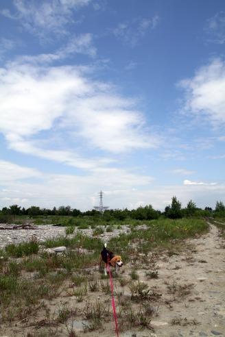 2011060608.jpg