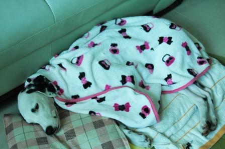 アル お昼寝 毛布