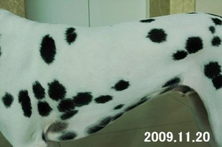 アル 左 20091120