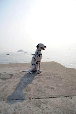 アル 海辺1