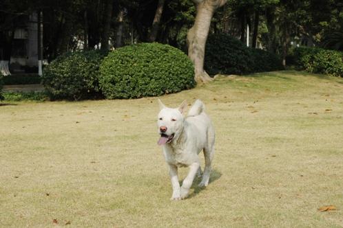 20091206 老人ホーム 小白