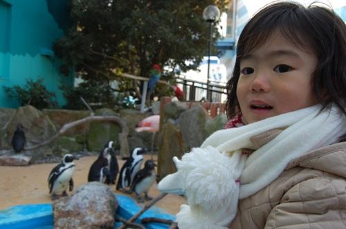 私 ペンギン好き