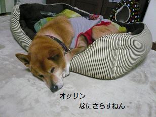 basyo6.jpg