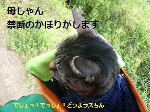 hiki2.jpg