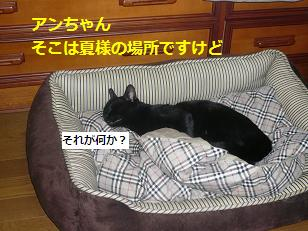 saisai2.jpg