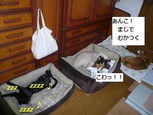 saisai4.jpg