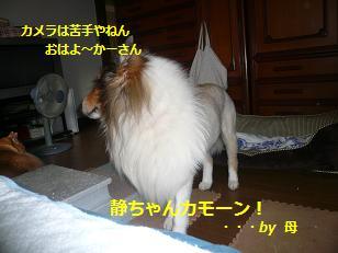 seinosuke1.jpg