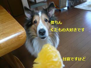 seinosuke2.jpg