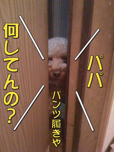 05_20101006231214.jpg
