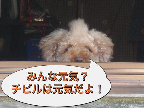 08_20100805215251.jpg