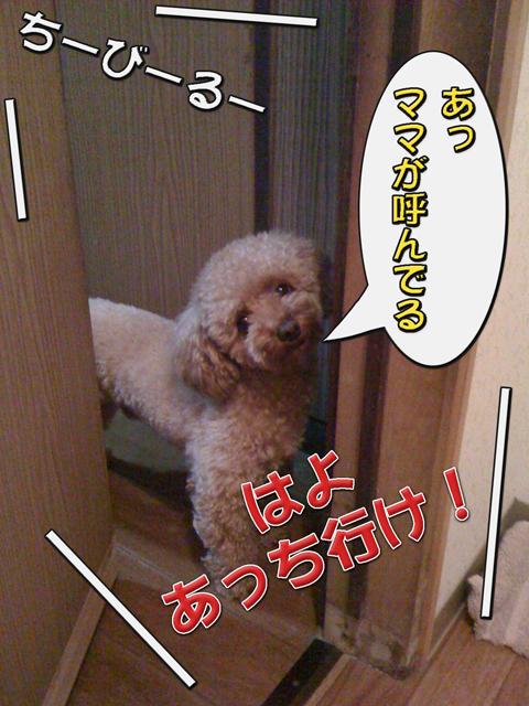 08_20101006231212.jpg