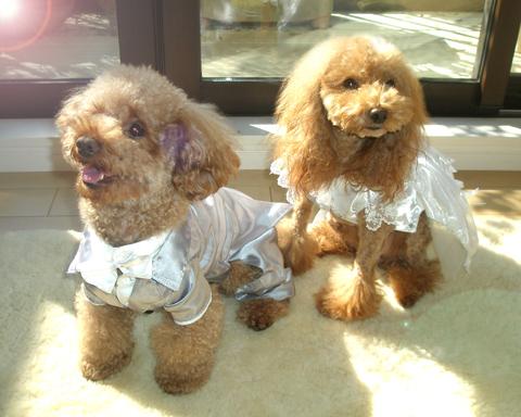 チビルとカリンちゃん結婚写真