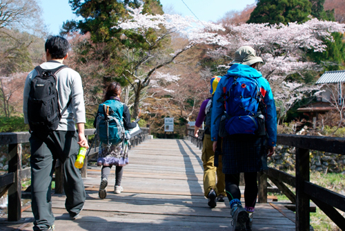 比叡山-スタート桜
