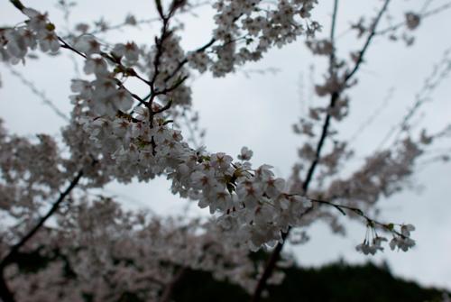 03-2雨の金剛山