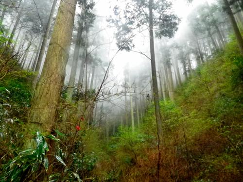 07雨の金剛山