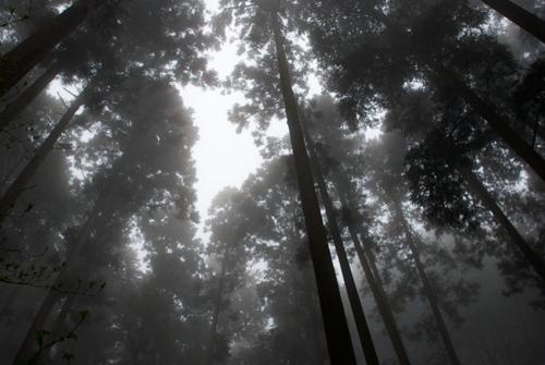 10雨の金剛山