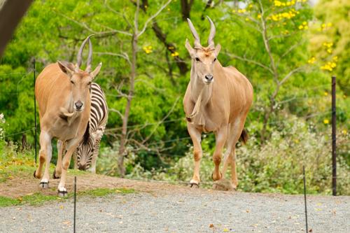 動物写真5