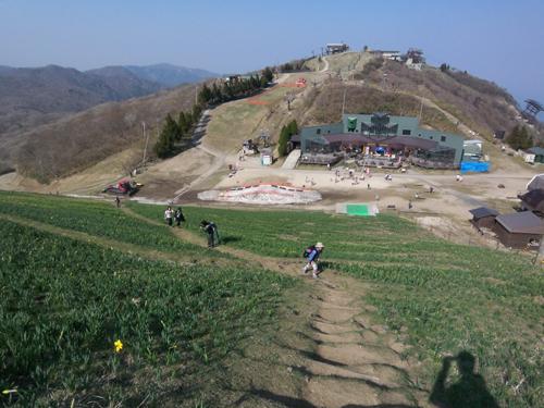 15-4蓬莱山水仙