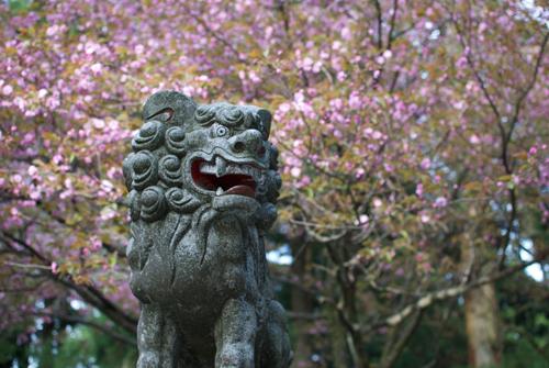 12-3金剛山狛犬