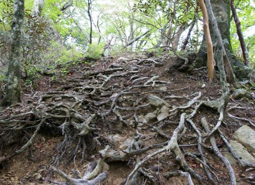 3-1木の根登山道ー大峰