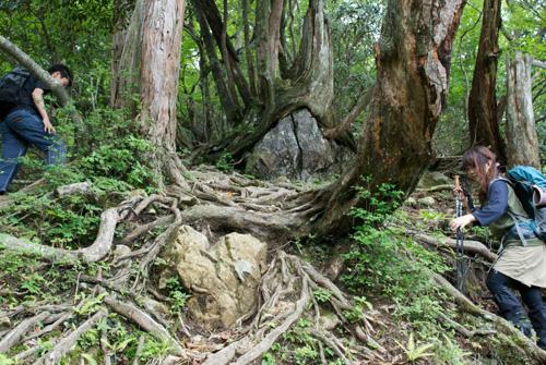 3-4木の根ー大峰