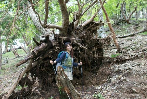 3-5木の根ー大峰