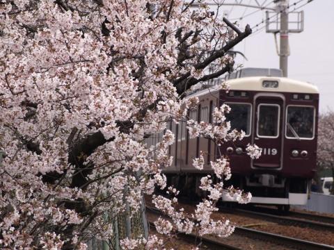 武庫之荘桜阪急1