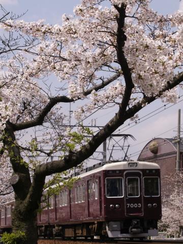 武庫之荘桜阪急2