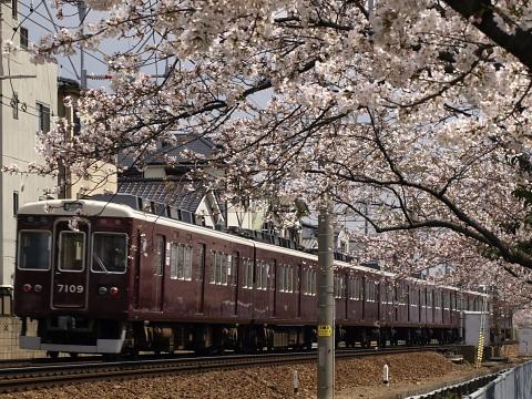 武庫之荘桜阪急3