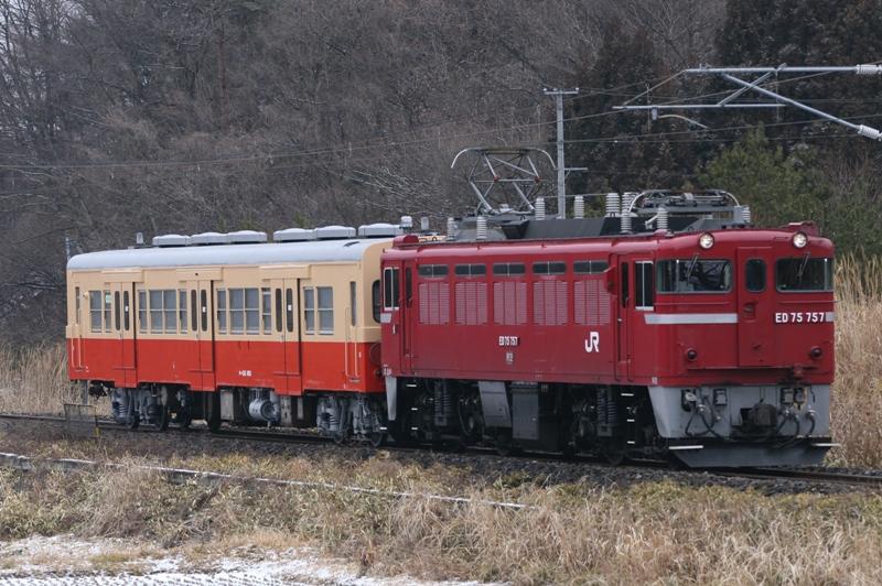 kamasu 057