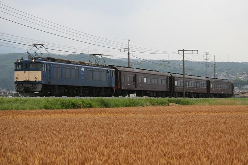 ヤギシブ 018