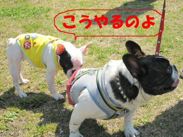 朝霧・春 178a