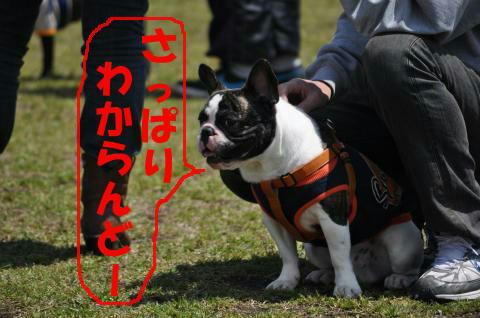 朝霧・春 094a