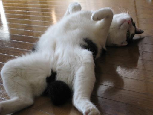 komatta cat