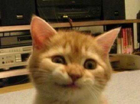 cat niyari