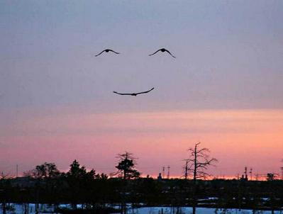 smile bd