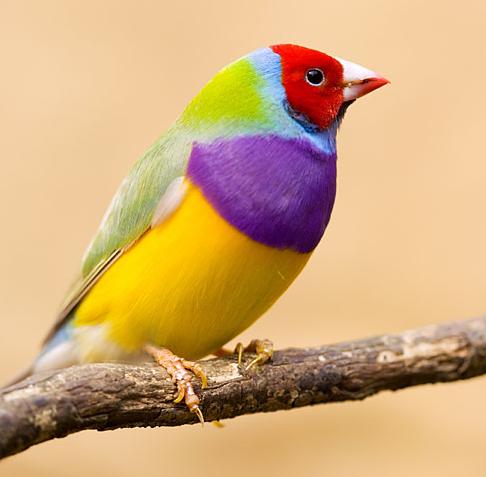 bird1.png