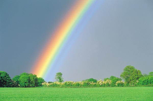 虹は七色?五色?