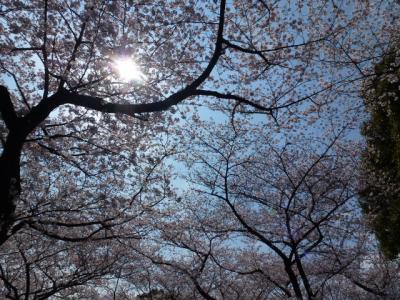 千鳥ヶ淵桜③4.6