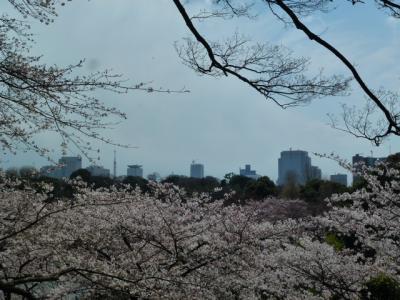 千鳥ヶ淵桜④4.6