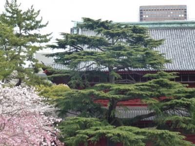 増上寺門と桜4.7