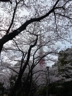 東京タワーと桜③4.7