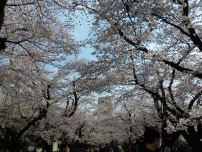東工大桜③4.7